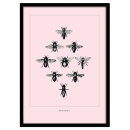 Image of   Bees Rosa plakat i ramme