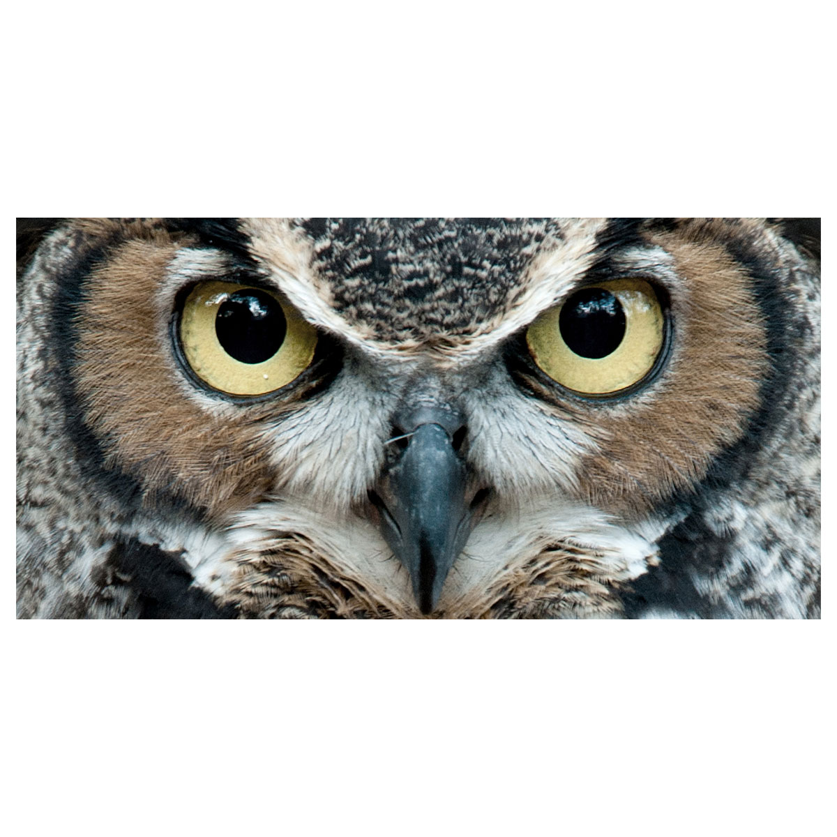 Image of   Eyes of the owl lærredstryk - PhotoInc