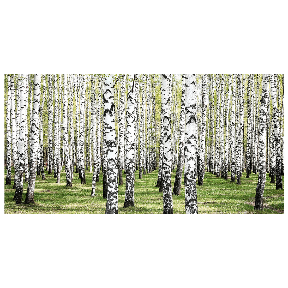 Image of   Green Birch lærredstryk - PhotoInc