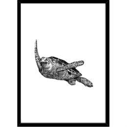 Image of   Hoei Denmark - Skildpadde - Indrammet