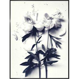 Image of   Hoei Denmark - White Flowers - Indrammet