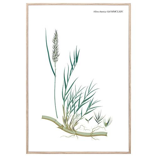 Image of   Nordic Flora 11 plakat i ramme