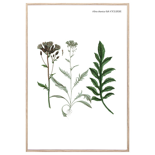 Image of   Nordic Flora 12 plakat i ramme