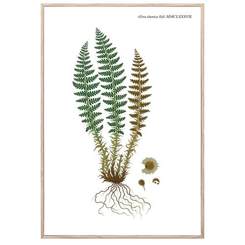 Image of   Nordic Flora 5 plakat i ramme