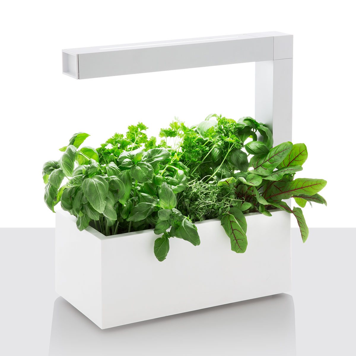 Billede af Tregren krydderurtepotte - Herbie Indoor Garden - White
